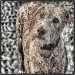 Le chien et la représentation mentale de son maître