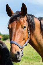 Pferdebox in Duhnen