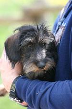 Hunde - häufige Patienten in der Tierarztpraxis