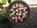 Blumen - als Zeichen der Dankbarkeit