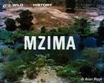 """Mzima: Portrait of a Spring"""" (Mzima: Ritratto di primavera)"""