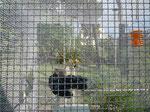 2013. Chicken coop, private garden, Roma, Italia