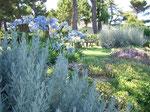 2006. Private garden, Potenza Picena, Italia