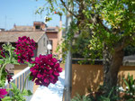 2011. Private terrace Trastevere, Roma, Italia