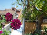 2015. Private terrace Trastevere, Roma, Italia
