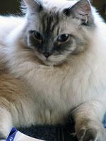 Shiva ist heute ein Jahr alt