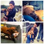 Spanien Tierschutz, Hund adoptieren