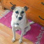 Tierschutzhund, Hund aus Tötungsstation Spanien