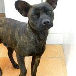 Hund adoptieren, Tierschutzhund