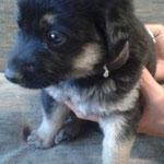 Spanischen Hund adoptieren, Tötungsstation
