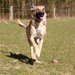 Hund retten, Spanien Tierschutz