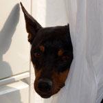 Hund aus dem Ausland, Hund adoptieren