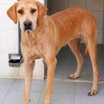 tierschutz spanien, hund adoptieren spanien