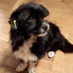 Tier adoptieren, Hund aus Rumänien