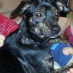 Hund aus Spanien adoptieren, Tötungsstation