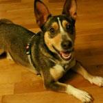Hund adoptieren, Tierschutz