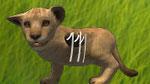 Dein Löwenbaby