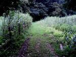 谷戸横断道草刈前