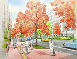 歩道整備に伴う街路樹の紅葉イメ-ジ