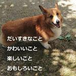 tomo-chi blog