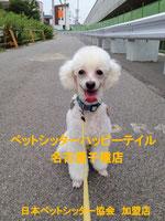 ペットシッターハッピーテイル名古屋千種店 ブログ
