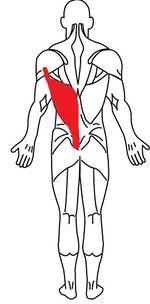 肩こり背中の痛みのストレッチ方法