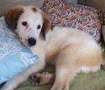 Beba durfte zur Lesia-Klinik, wurde dort behandelt und hat ihr Zuhause gefunden