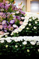 葬儀場の花 白菊