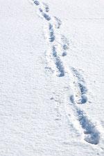 日本 北海道 札幌 雪の足跡