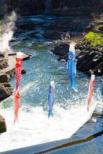 日本 北海道 鯉のぼりの滝のぼり