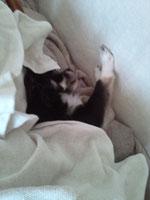 08.20 犬よ。なぜ両手をソファの背に当てて眠っているのか。