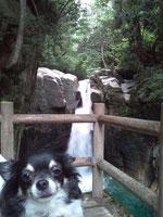 08.28 夏休みに訪れた、岐阜県にある龍神の滝。水がひじょうにきれい!木曽川水系。犬は無理に写真を撮るとこういった微妙な顔をします。