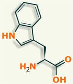 Triptófano aminoácido
