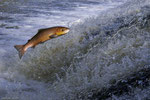 --------- poissons ---------