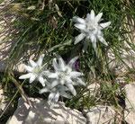 Fleurs de Drôme-Ardèche
