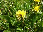 Harzer Bienenbrot, Perga