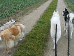 Mit Husky-Baby Taiga unterwegs