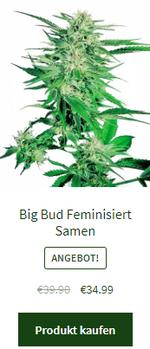 Big Bud feminisiert