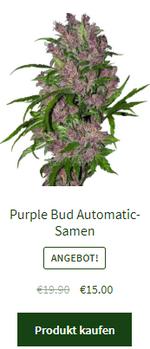 Purple Bud Automatic-Samen