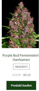 purple bud femenisierte hanfsamen