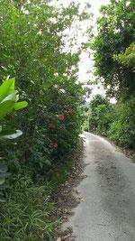 紅露工房から車道への小道