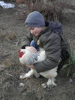 Der Lieblingshahn meines Sohnes.