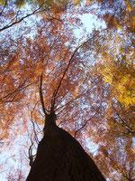 Baumgestalt im Herbst