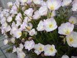 川沿いにひっそりと咲く花たち