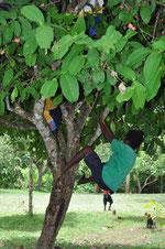 木に向かってジャーンプ!
