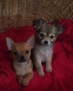 Jack & Bijou