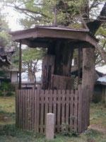 東本願寺第十六世一如が寄進した杉。現在ではその根に近い部分のみ、屋根と木の柵に覆われて保存されています。