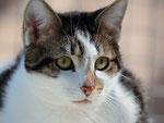 """Tigresse, du latin """"tigris"""", qui vient du grec, dérivé lui-même de l'ancien persan """"tigrâ"""" : flèche aiguisée"""