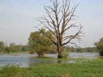 Rabensburger Thaya-Auen