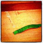 芋虫は芋虫であることが当り前で、芋虫以外のものにはなれない
